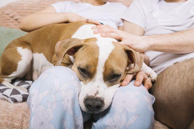 Buy a Universal Pet Medicine Online