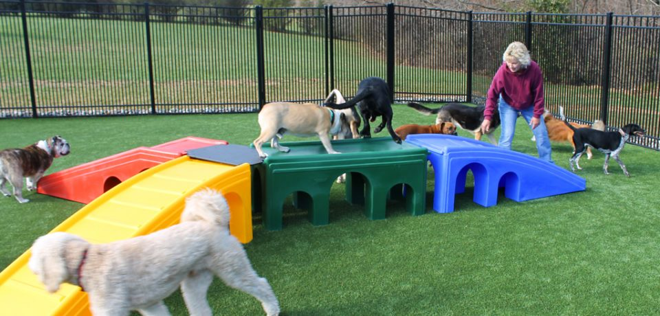 The Best Doggy Day Care And Its Advantages.